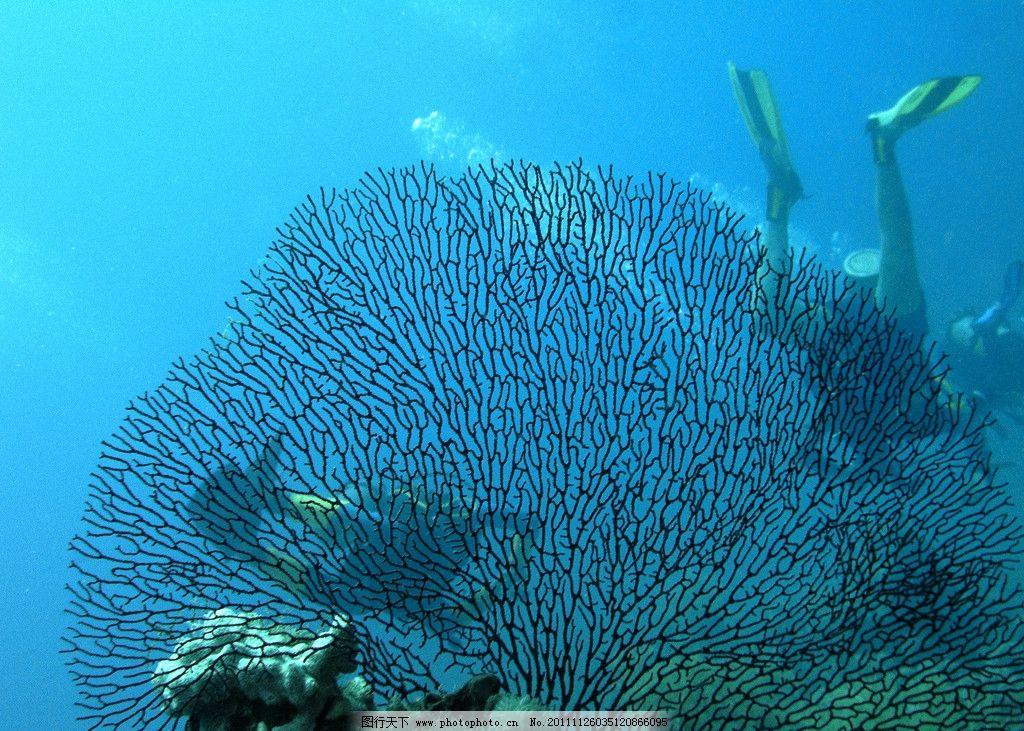 海底珊瑚特写图片
