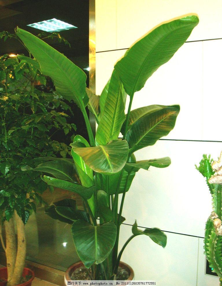 绿色景观植物 礼品鲜花店景观植物 绿叶 花瓶 灯光 花草 生物世界