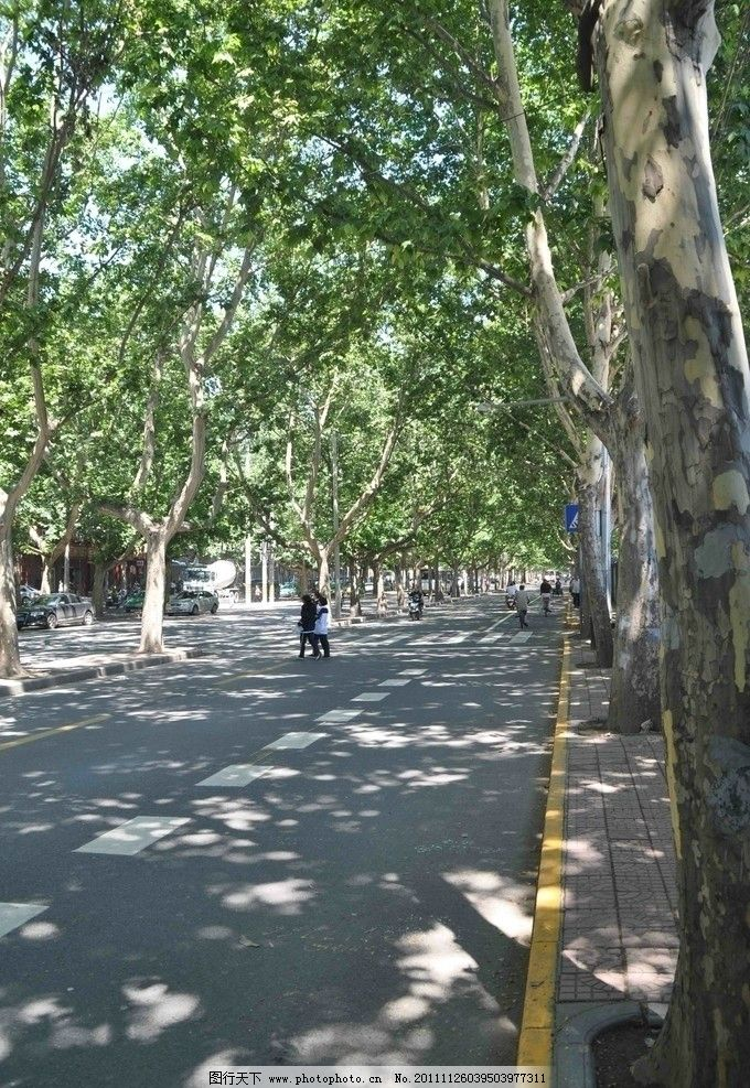 街道 植物 西安 法国梧桐 行人 阳光 风景透视 自然风景 旅游摄影