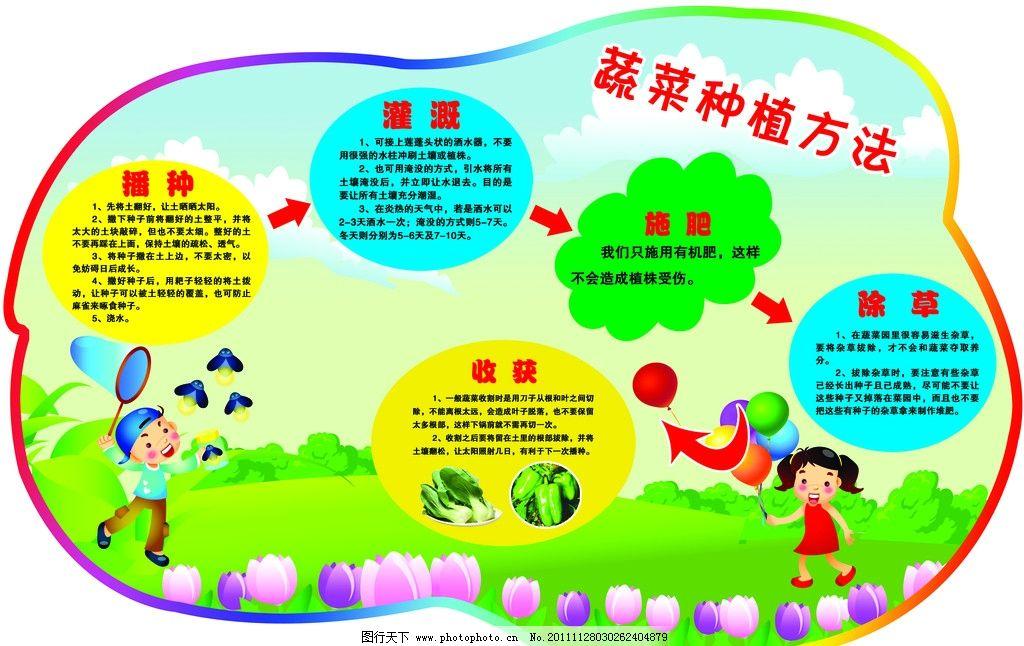 蔬菜种植方法展板 幼儿园 学校 卡通 流程图 可爱 广告设计模板
