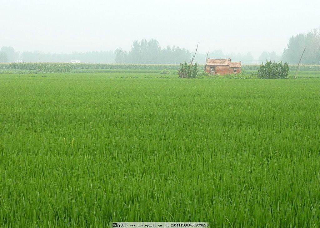 田地 稻田 小屋 田园风光 自然景观 摄影 180dpi jpg