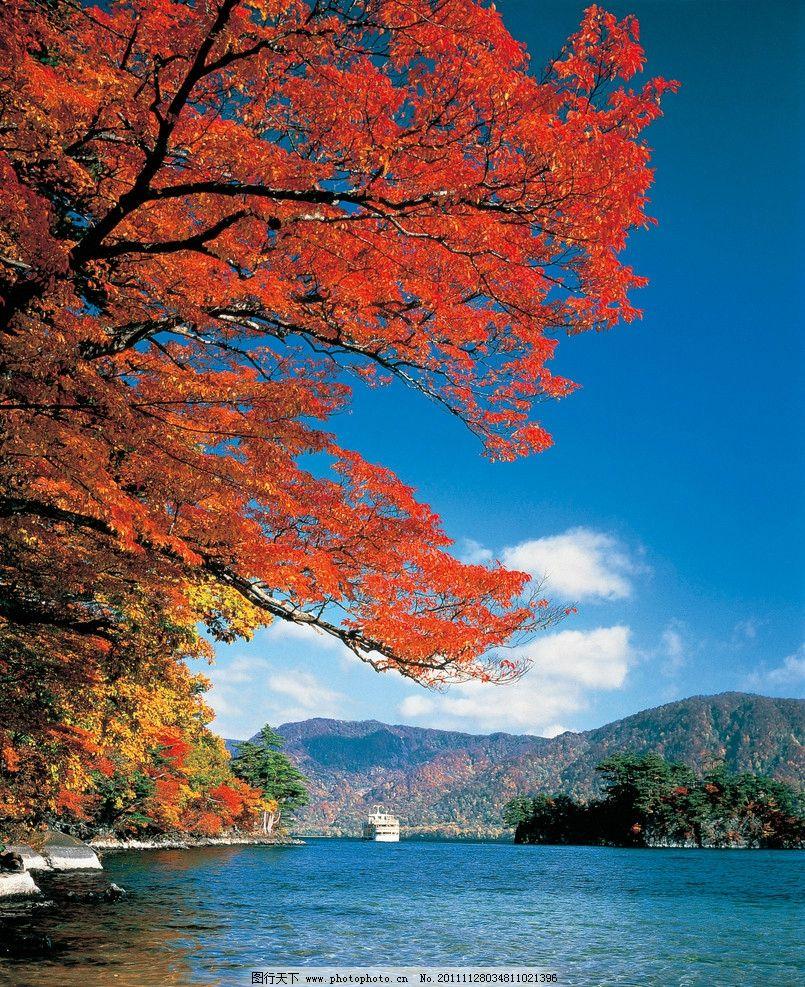金秋森林公园 金秋 秋天 森林 生态公园 公园 青山绿水 大树 树林 湖