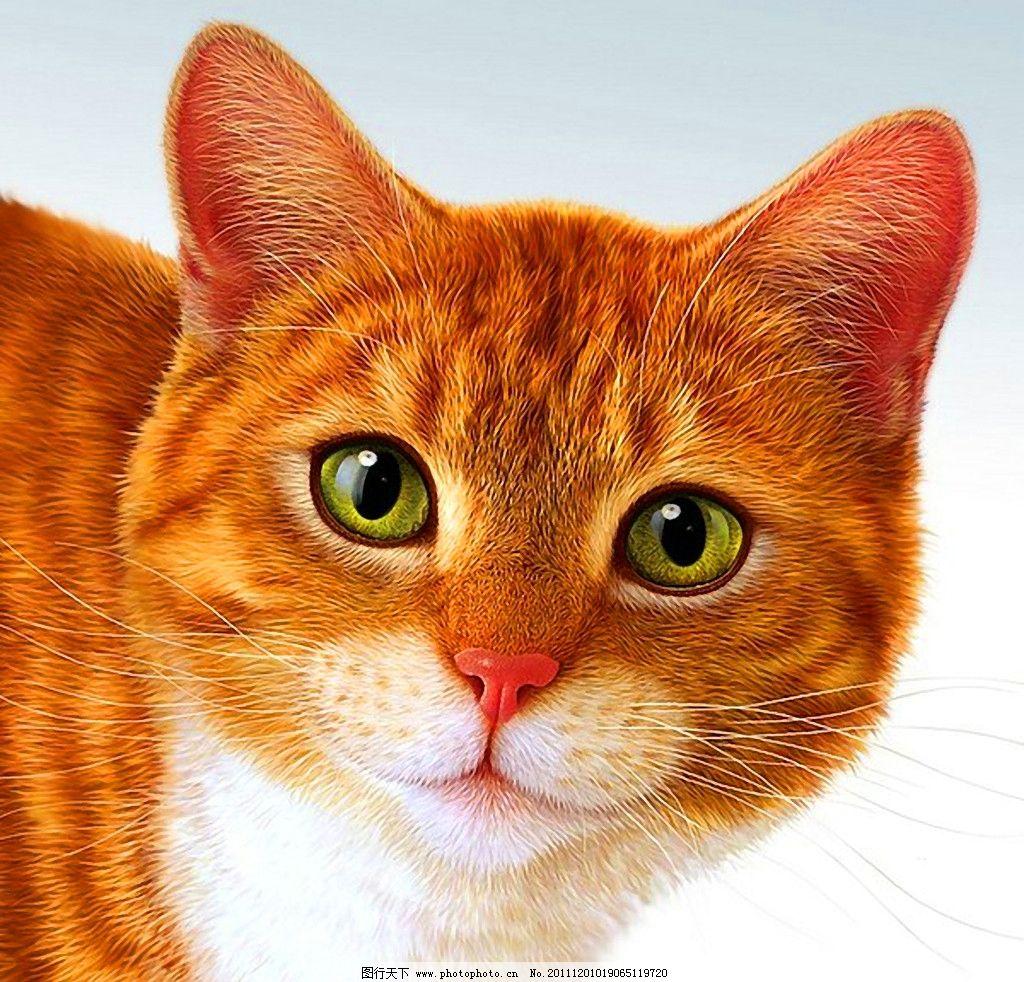 艺术 油画 趣味 儿童画 绘画 插图 萌图 动物 宠物 绘画书法 文化艺术