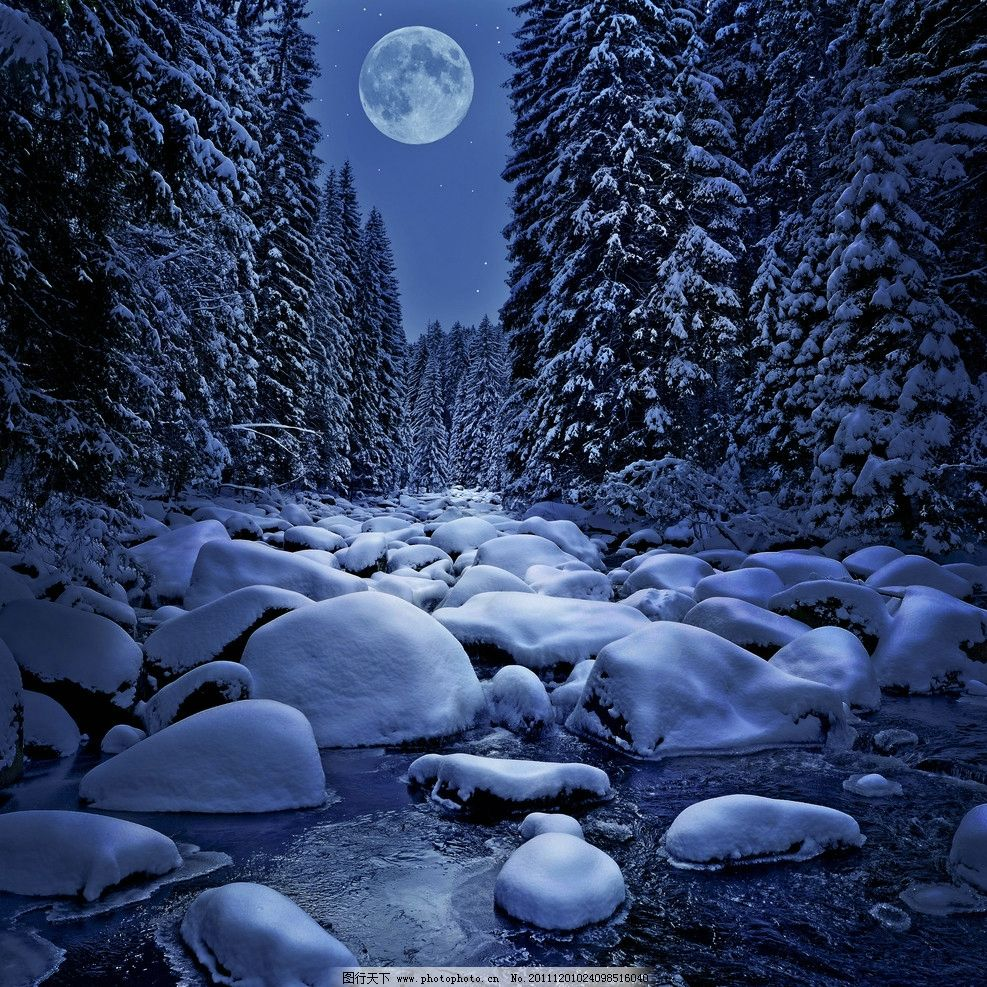 冬季夜景森林雪景图片