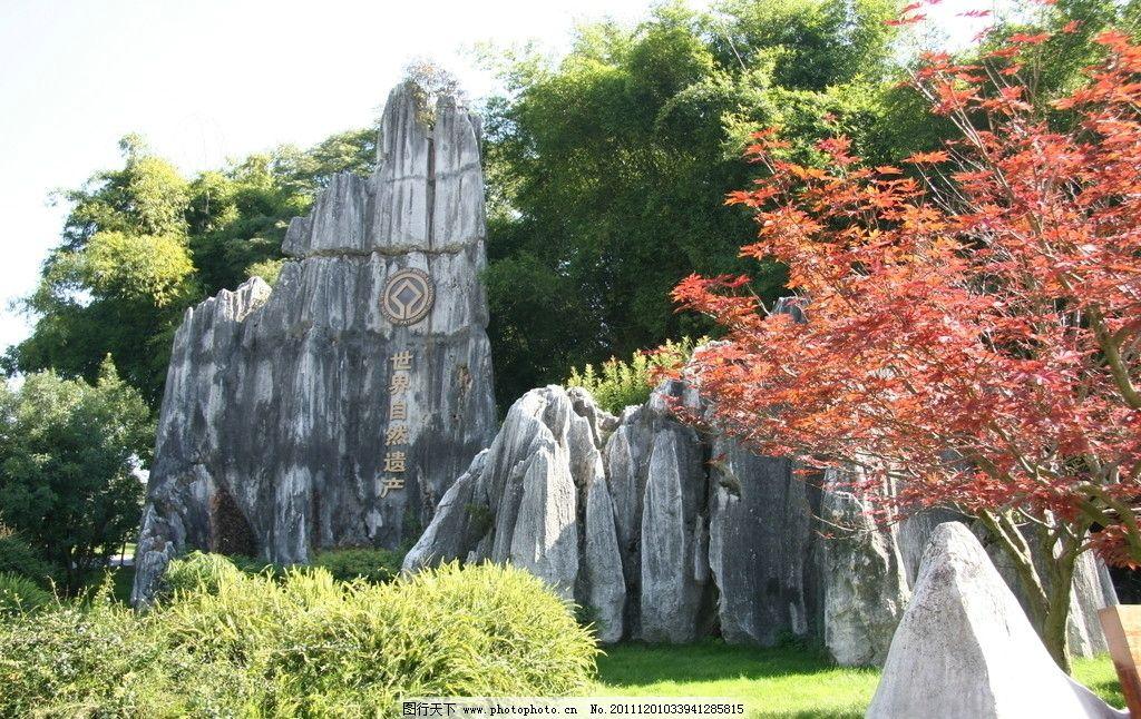 石林 云南 地质 遗产 风景 旅游 红叶 石头 绿树 阳光 蓝天