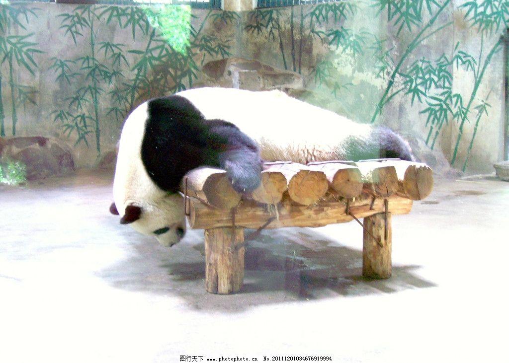 动物园 熊猫 浙江杭州 摄影