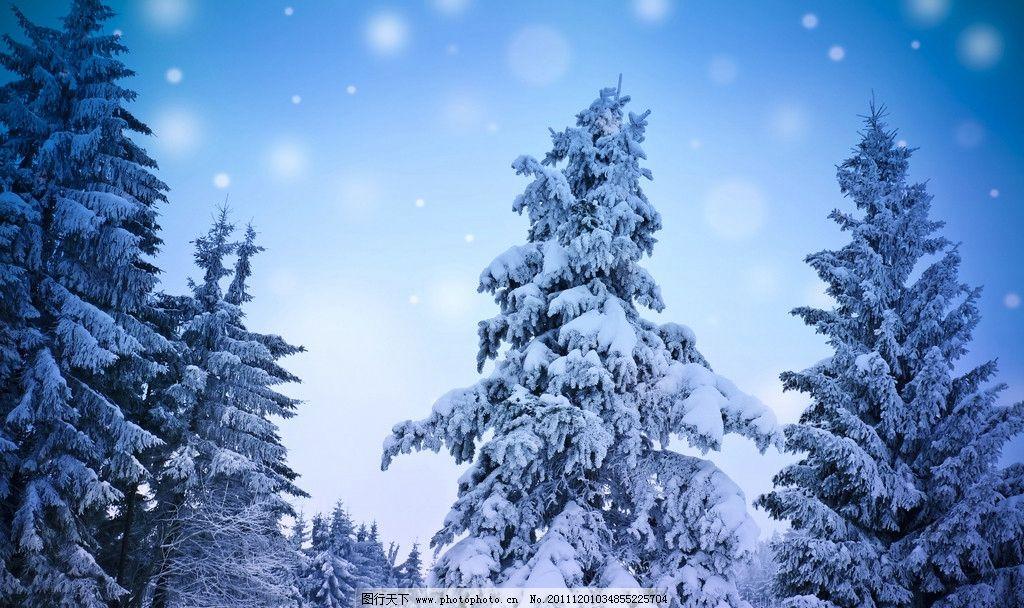 森林雪景 冬季 雪景 冬季雪景 大雪 雪 树 树林 自然风景 自然景观