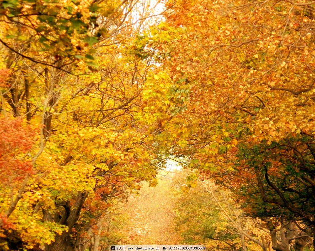 青岛八大关之秋图片