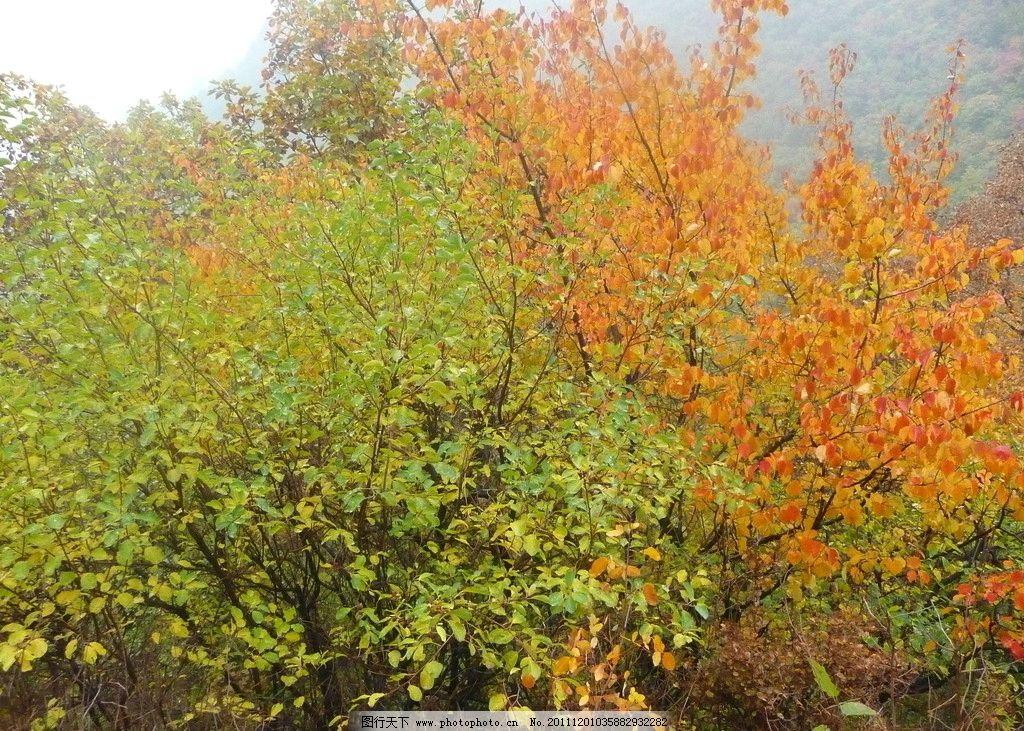 秋天 叶子 树木 金色叶子 黄色叶子 秋天叶子 树木树叶 生物世界 摄影
