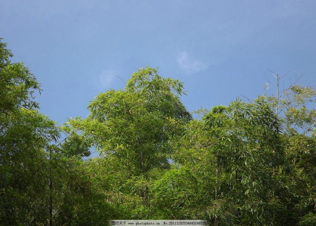 绿树 蓝天绿树 天空 白云 绿山 山水风景 自然景观 摄影 园林 自然