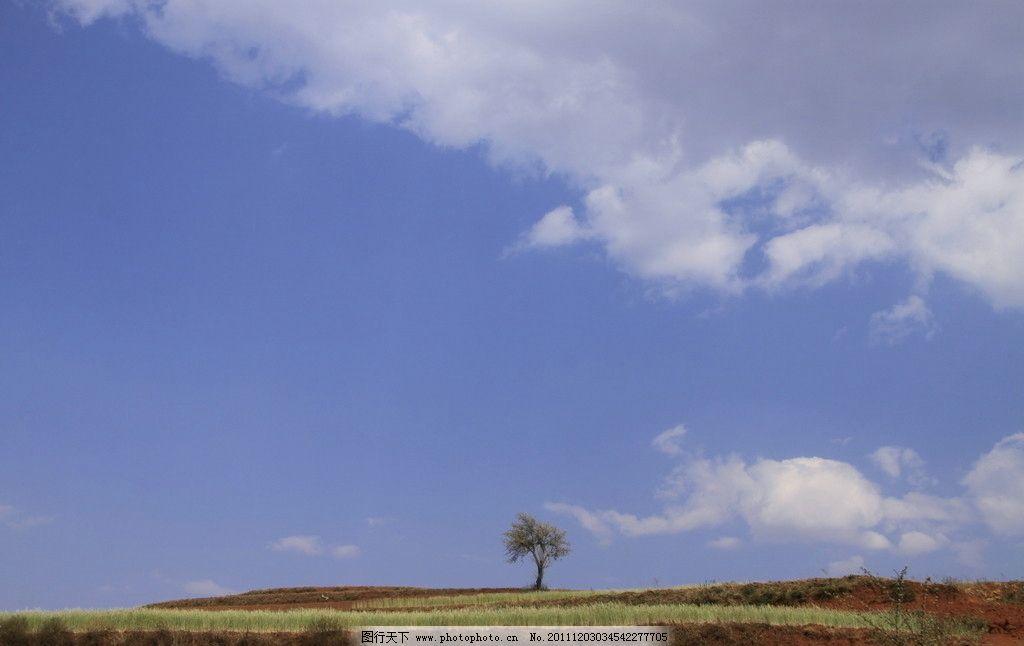 蓝天白云 树木 农田 美丽风光 大自然 自然风景 摄影 国内摄影 旅游
