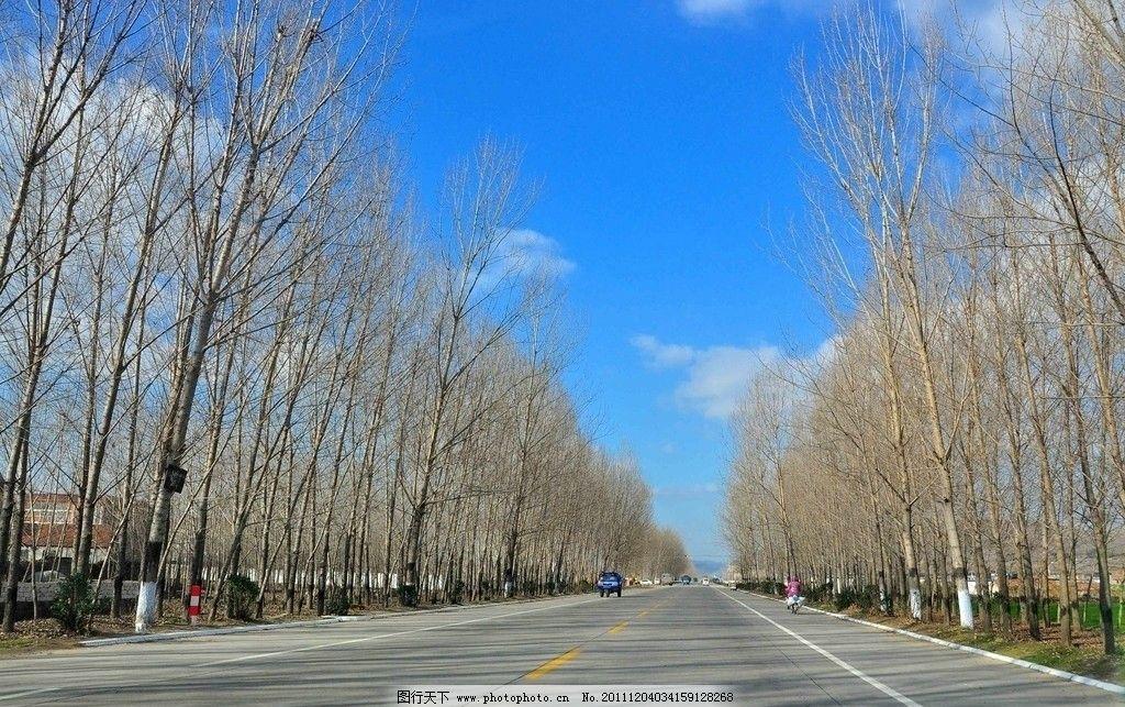 蓝蓝天上白云飘 蓝天 白云 树木 道路 两排树 自然风景 旅游摄影 摄影
