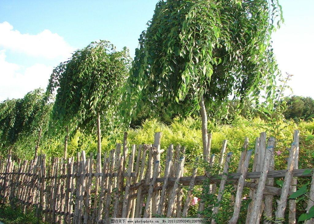 木栅栏 公园 小路 天空 摄影自然风景 自然风景 自然景观 摄影 树木