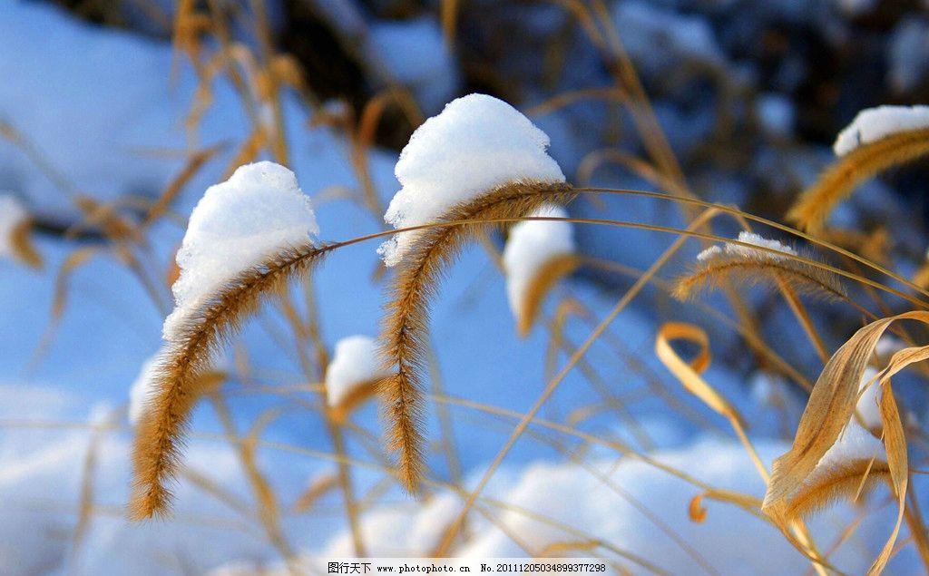 冬天雪景简笔画动物