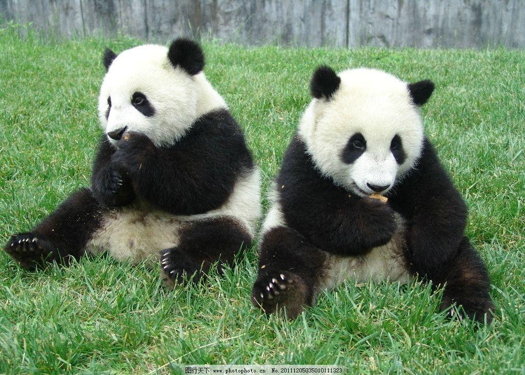 大熊猫 国宝 野生动物 生物世界 摄影 72dpi jpg
