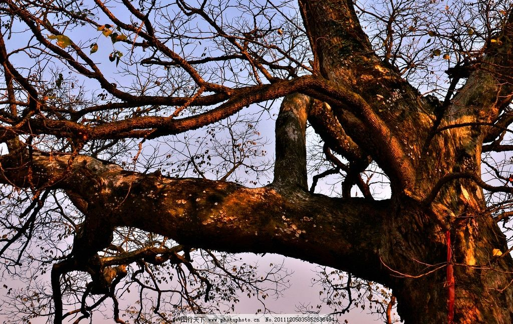 大树 树枝 阳光 树木 老树 风光摄影 树木树叶 生物世界 摄影 300dpi