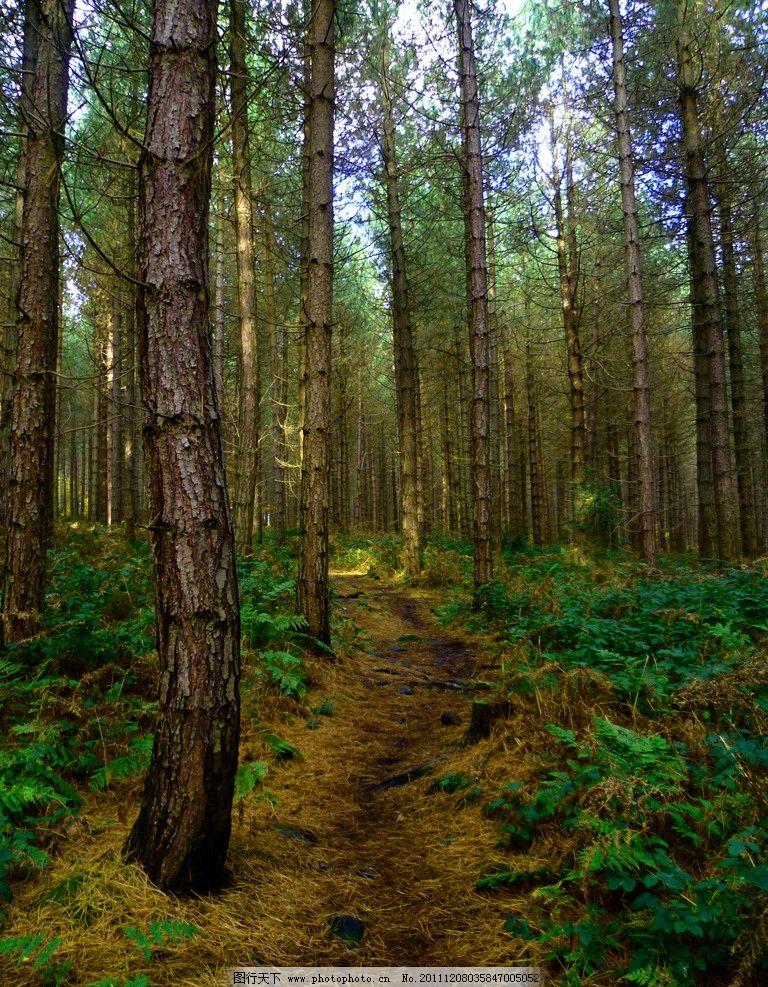 壁纸 风景 森林 桌面 768_987 竖版 竖屏 手机