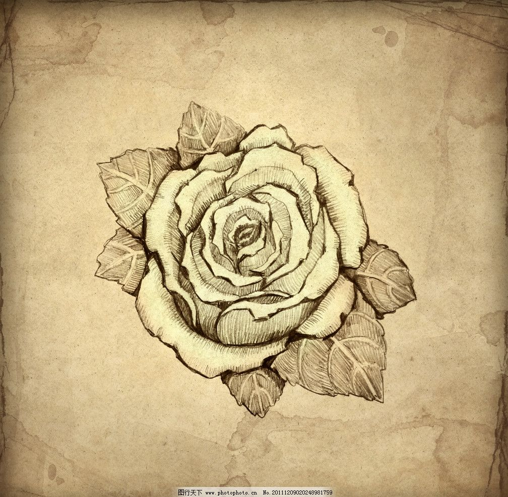 手绘 复古素描 稿纸 泛黄 素描 手绘玫瑰 玫瑰花 背景底纹 底纹边框