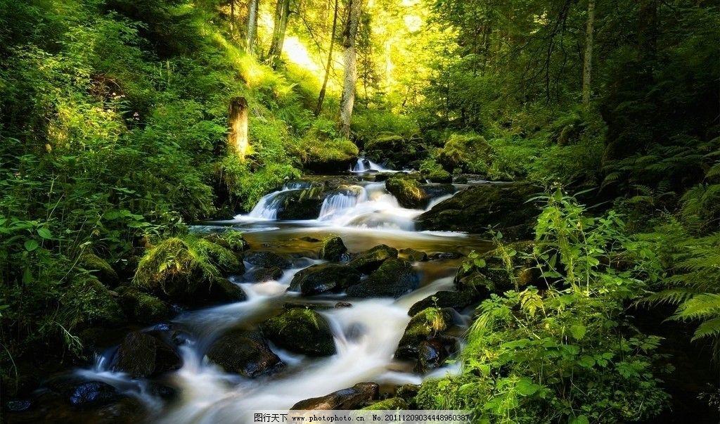 小溪 森林 流水 石头 山水风景 自然景观 摄影 72dpi jpg