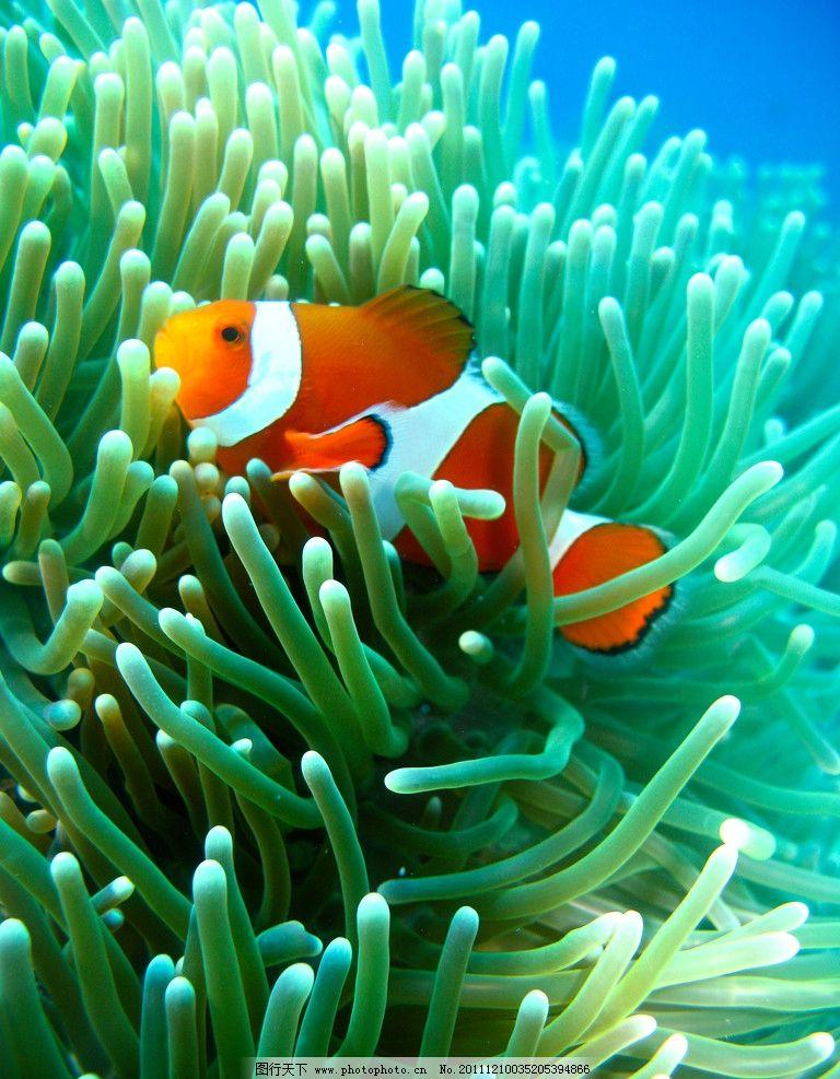 海里热带鱼图片