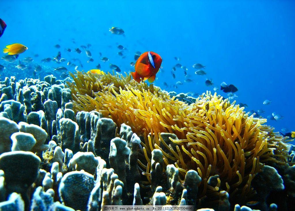 海底热带鱼图片_鱼类_生物世界