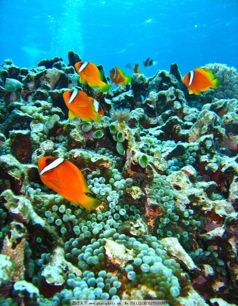 海底热带鱼 海底世界 美丽 可爱 热带鱼 珊瑚 热带 潜水 发现 卡通 大