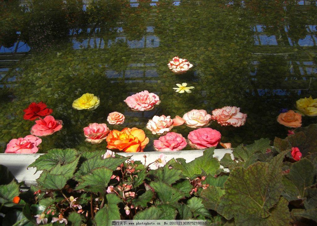 日本名古屋街边的荷池小景 兰州 花草 去日本 旅游 美丽 大自然