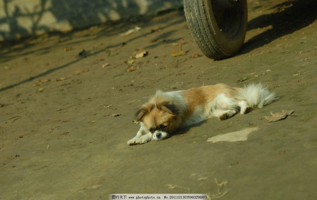 趴着的可爱的狗狗图片