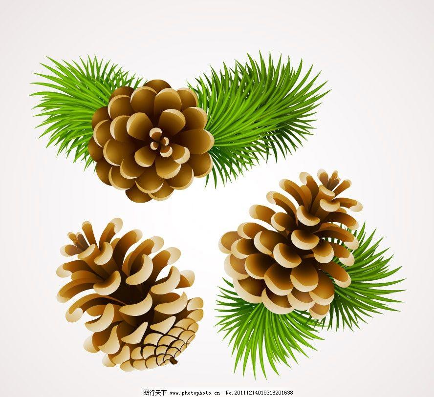 圣诞松树枝松子图片