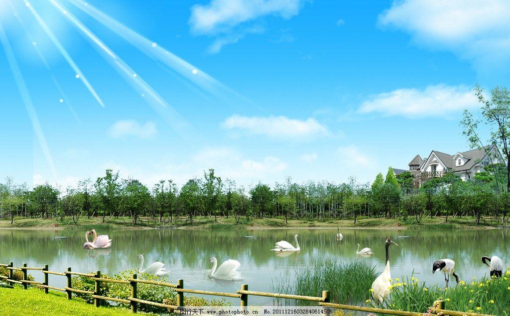 自然风景 蓝天 白云 绿地 小河 星光 围栏 仙鹤 天鹅 树林