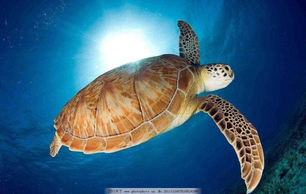 乌龟是不是脊椎动物