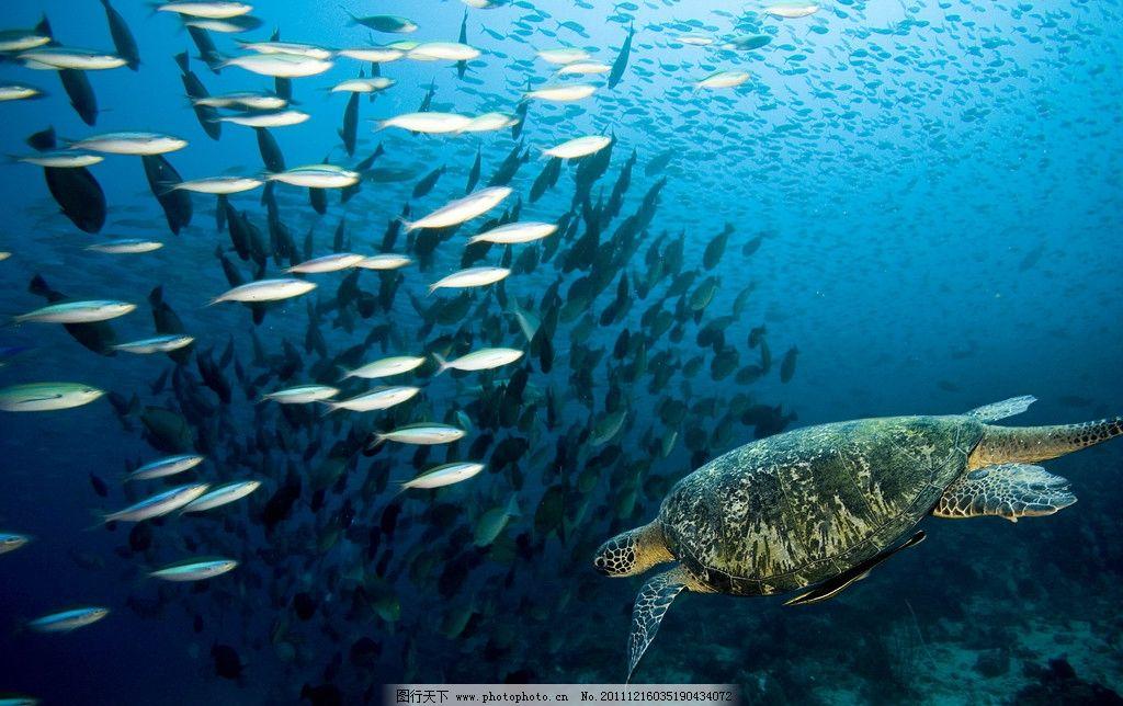 海底世界 鱼群 深海 蔚蓝 海龟 海洋生物 生物世界 摄影 300dpi jpg