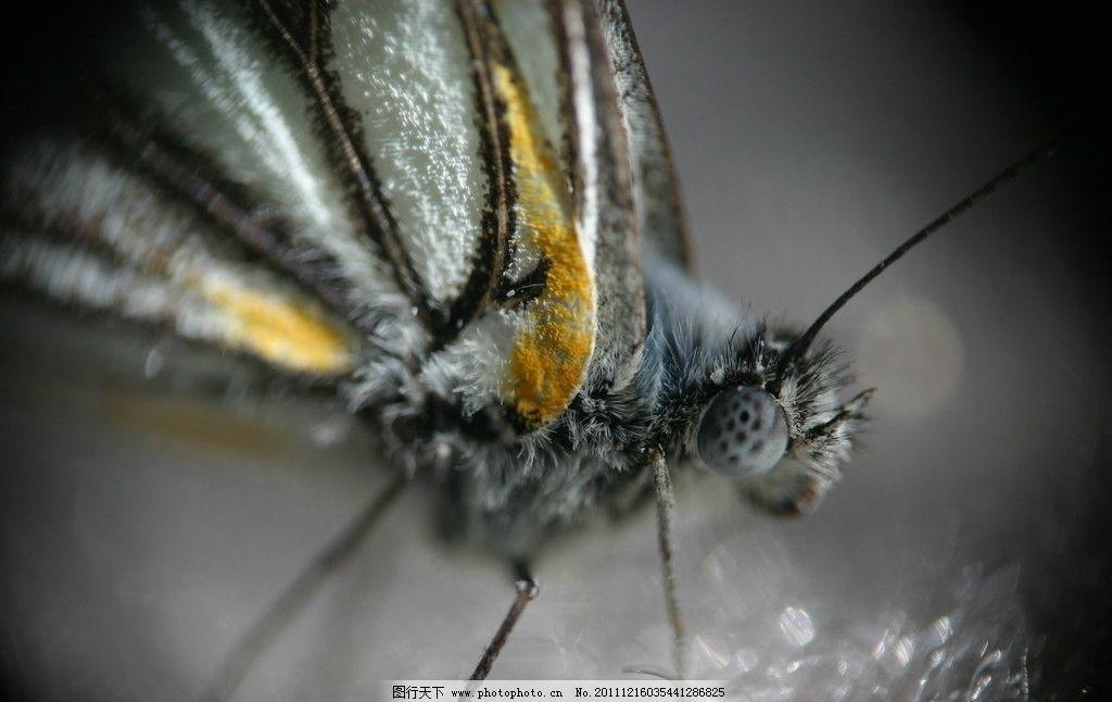 蝴蝶 特写 头 眼睛 腿 翅膀 花纹 昆虫 生物世界 摄影 180dpi jpg