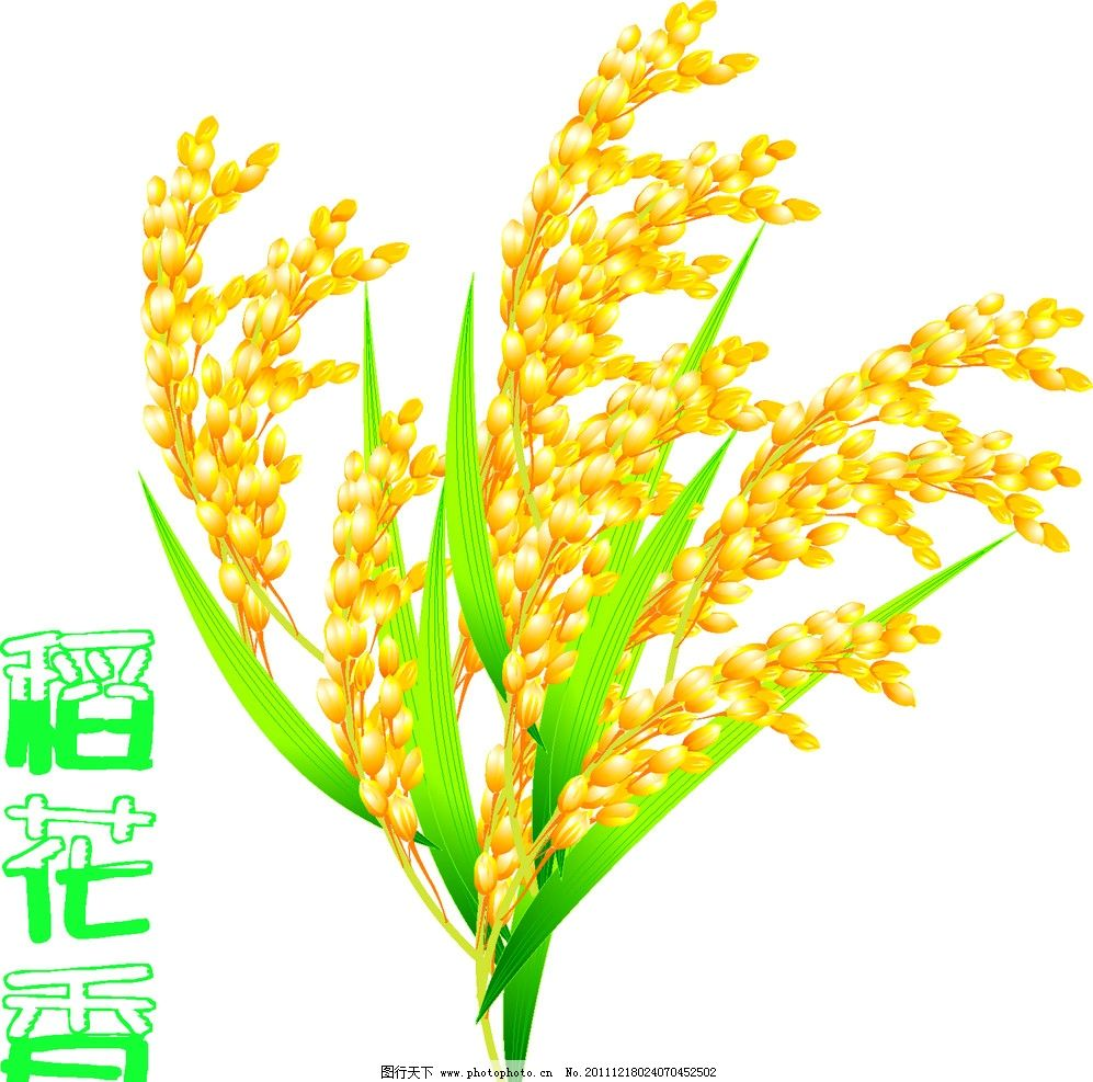 矢量手绘稻穗 稻穗 稻谷 金黄 花纹 花边 边框 丰收 收获 粮食 农作物