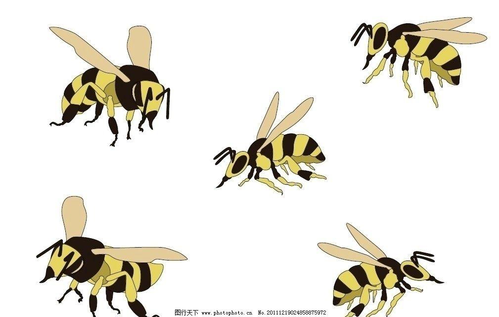 蜜蜂 矢量 昆虫 生物世界 ai