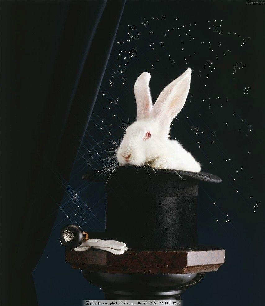 魔术师 小兔子 魔术 兔子 小白兔 帽子 礼帽 魔术棒 魔法 可爱 野生