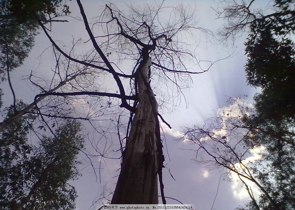 枯木天堂 枯木 天空 树木树叶 生物世界 摄影 300dpi jpg