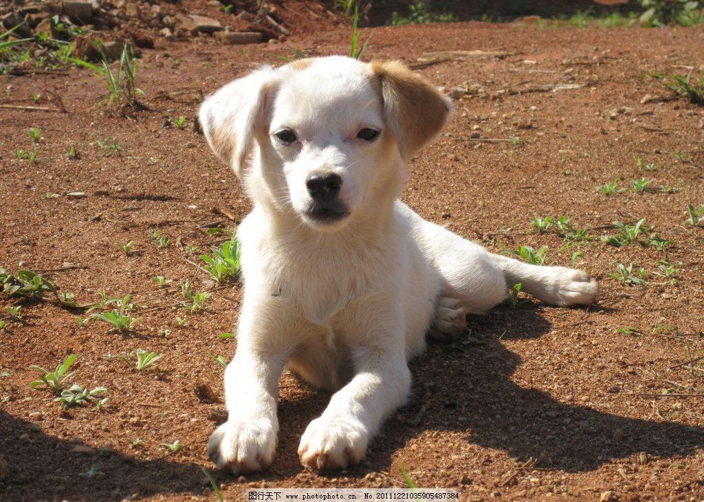 可爱狗 可爱小狗 小狗 小花狗 黄狗 动物 宠物 生物世界 家禽家畜