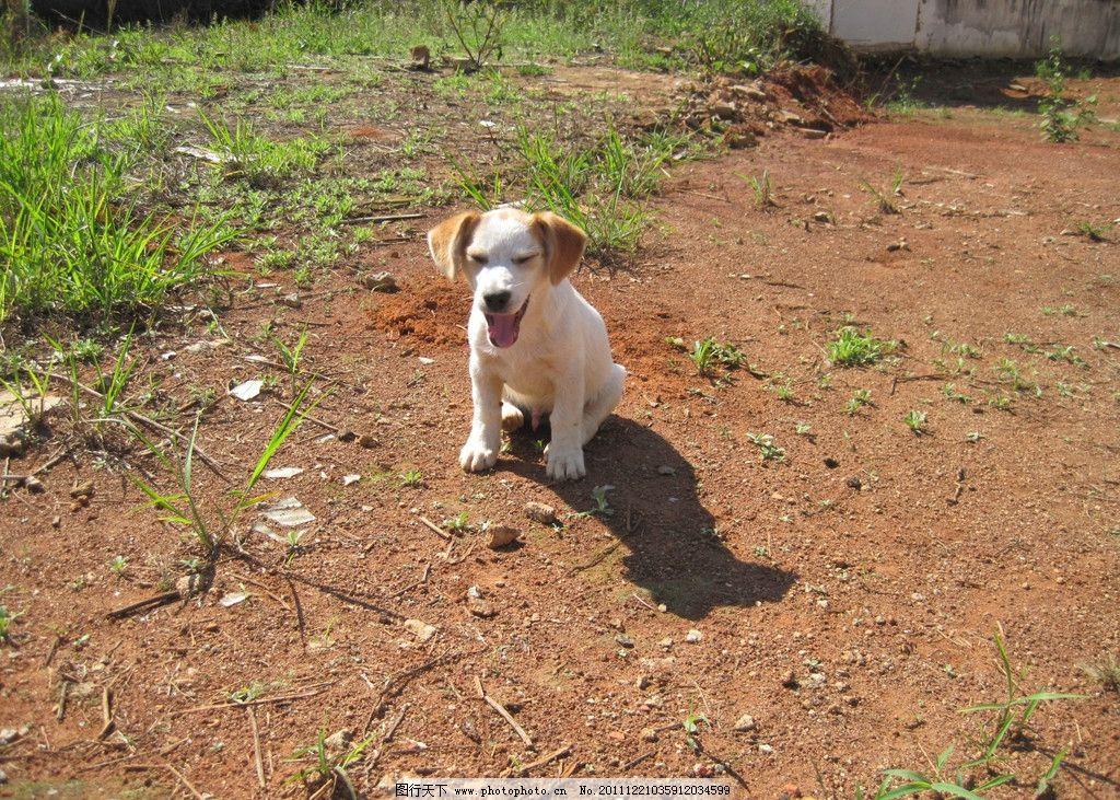 小狗 可爱 可爱小狗 小花狗 黄狗 动物 宠物 生物世界 家禽家畜 摄影