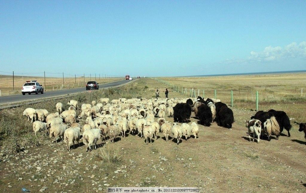 放羊简谱第三句456615