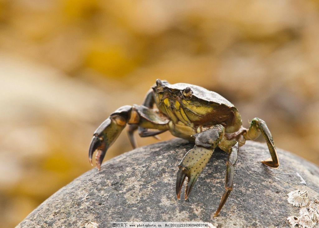 海绵纸手工制作小动物螃蟹
