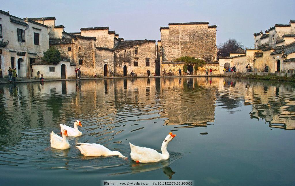 宏村 房子 水面 白鹅 倒影 阳光 风景名胜 自然景观 摄影 300dpi jpg