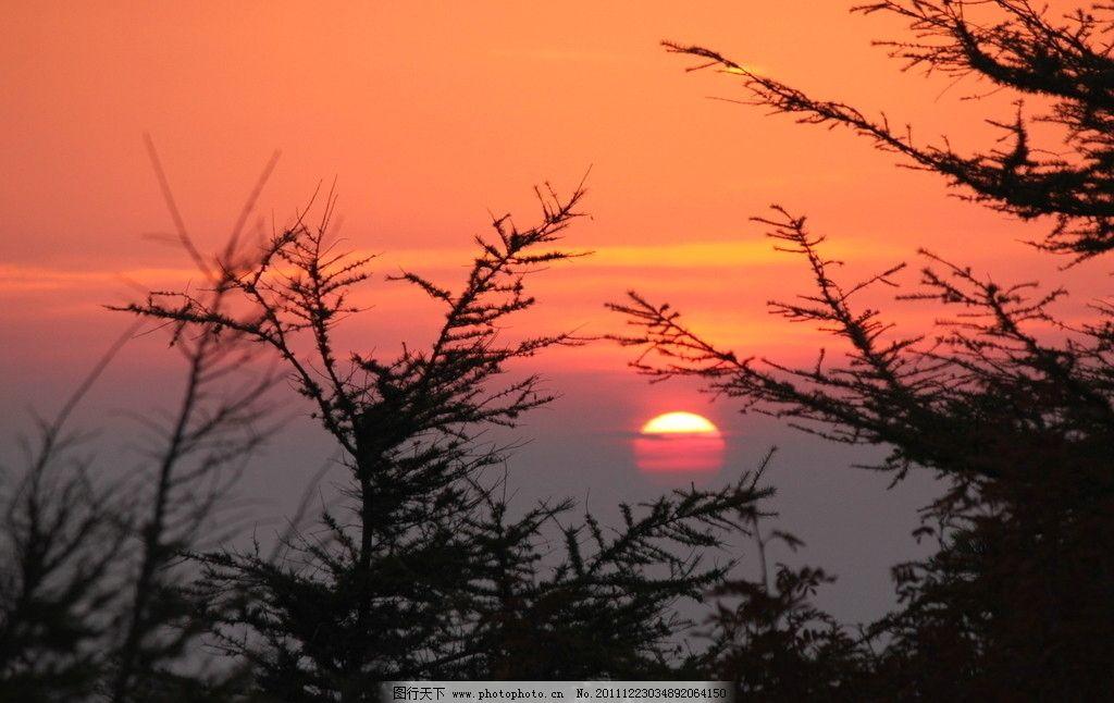 美丽日出 风景 树影 橘红 自然风景 自然风光 早晨 太阳 自然景观
