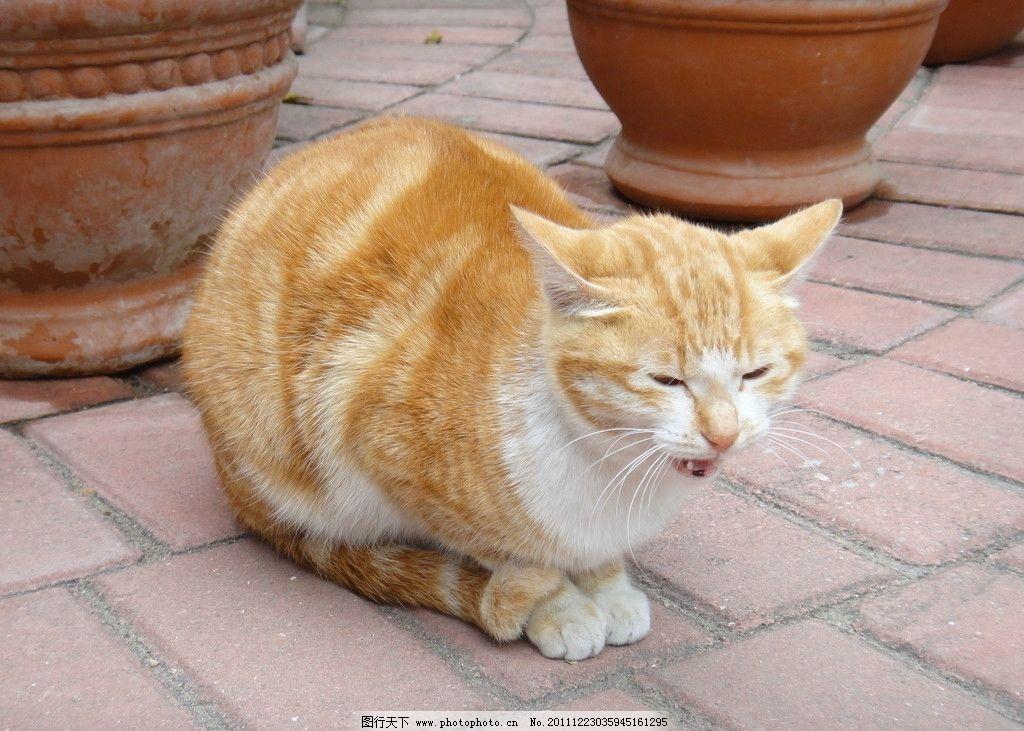 木板雕刻图案大全猫