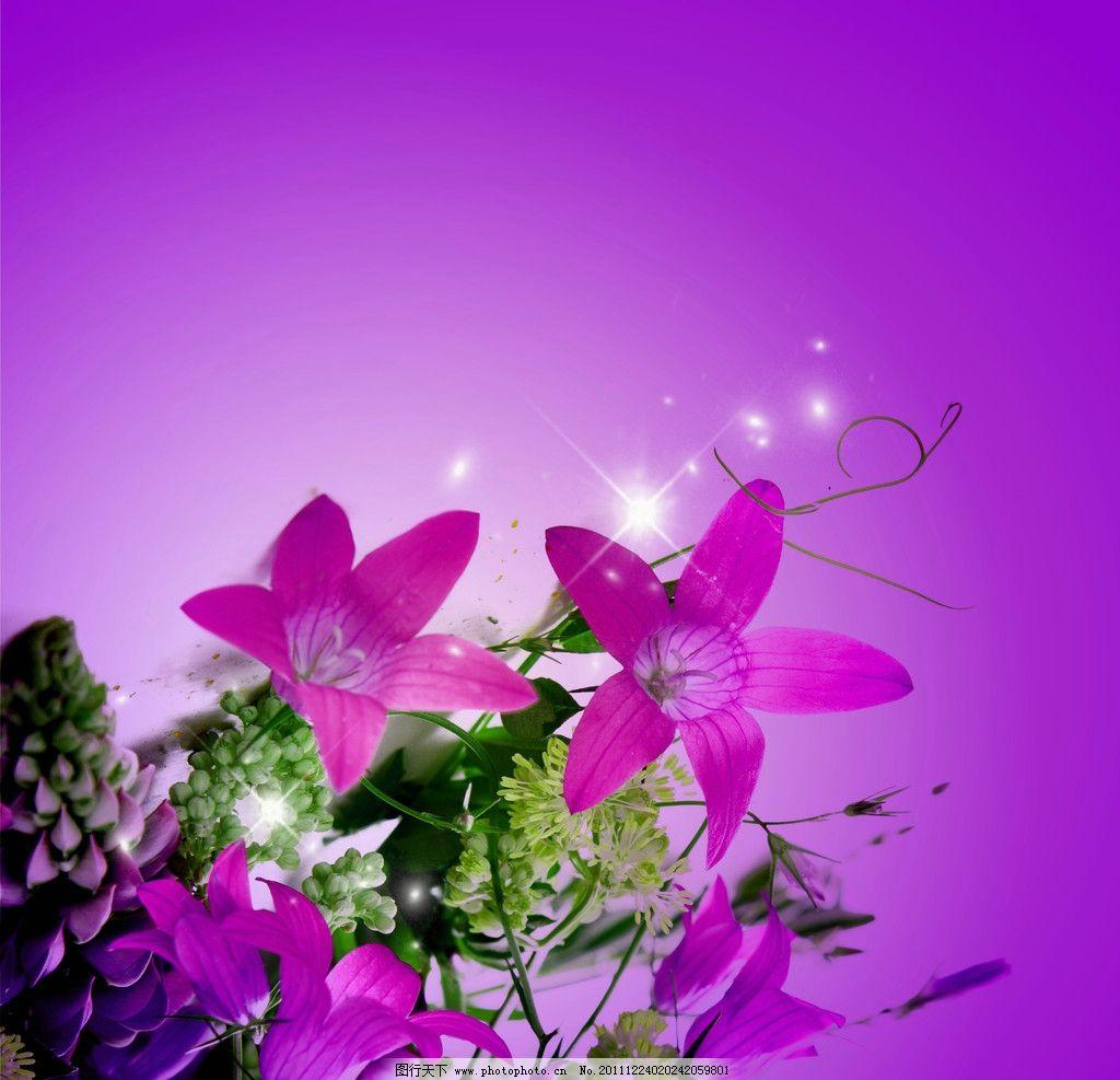 紫色花背景图片
