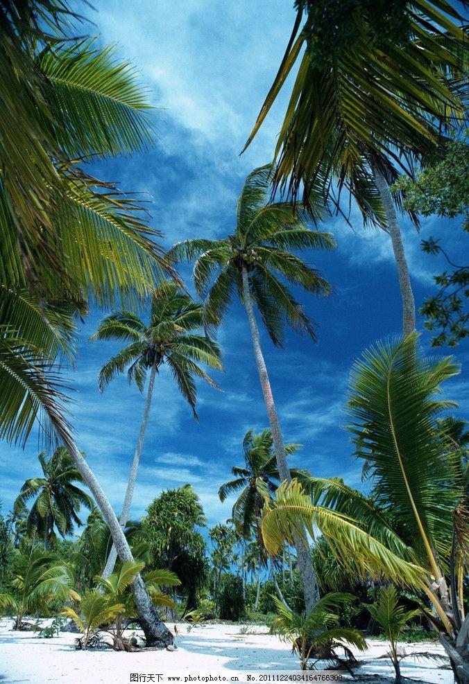 海南风情 海南 海滩 椰树 蓝天 白云 沙滩 城市 自然风景 旅游摄影 摄