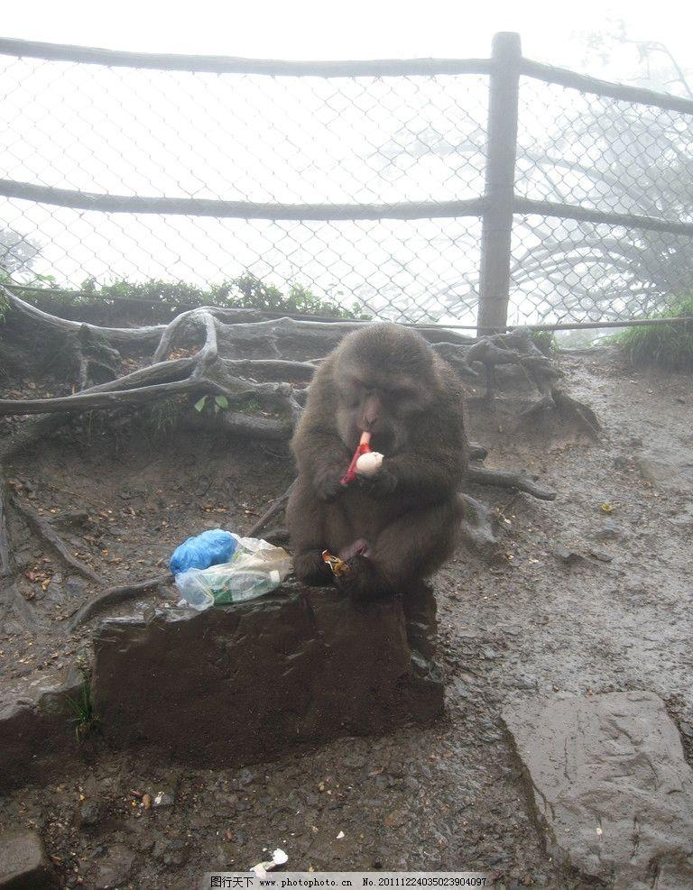 峨眉山的猴子 猴子 峨眉山 好凶 好可爱 好吃的猴子 吃相 动物 野生