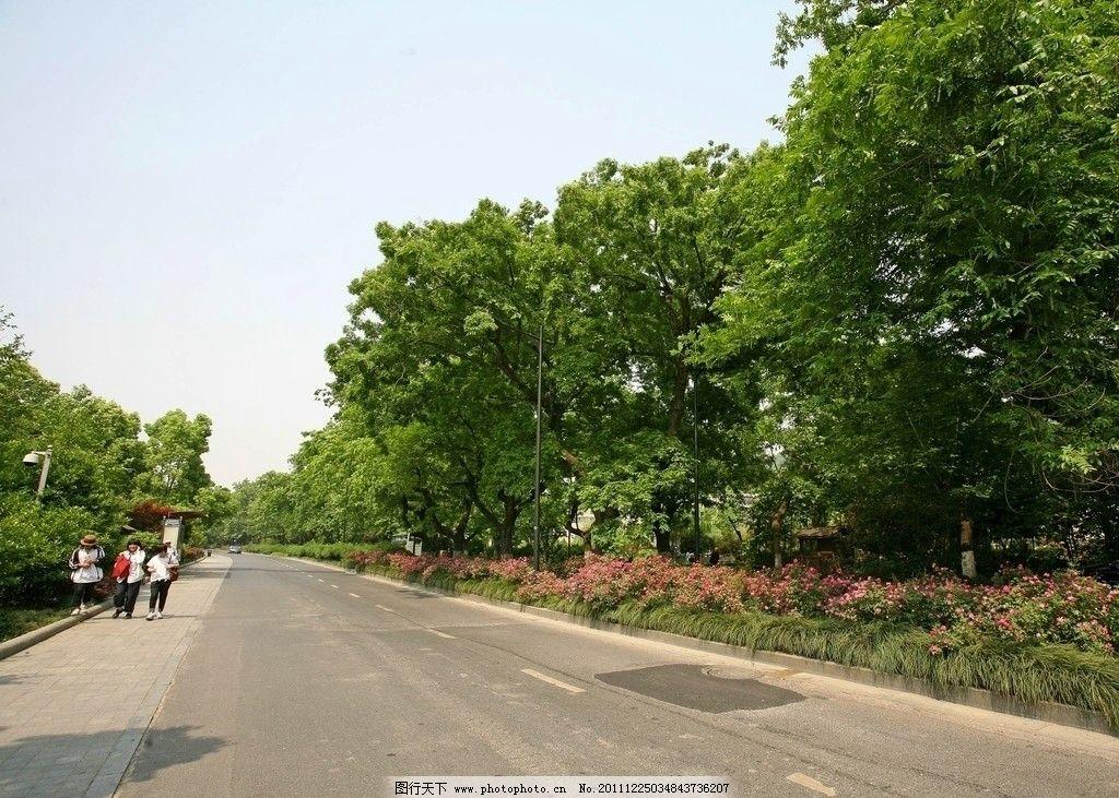道路 杭州 城市 风景 景区 树木 游人 鲜花 街道 蓝天 白云