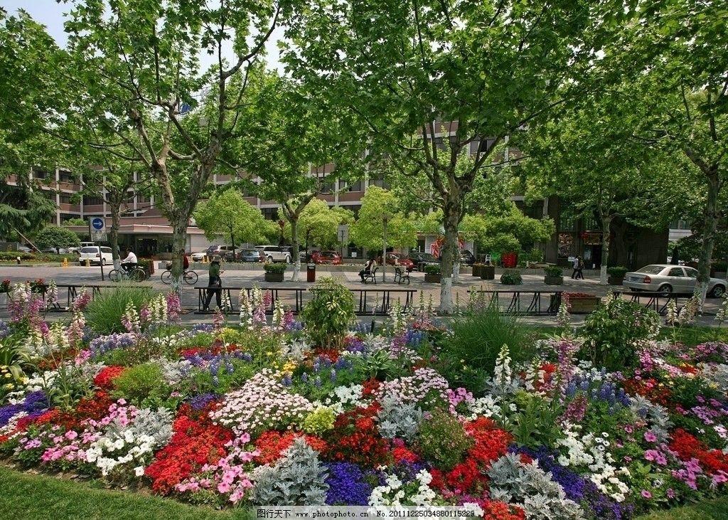 杭州 城市 风景 景区 花坛 树木 鲜花 街道 车辆 道路 公路