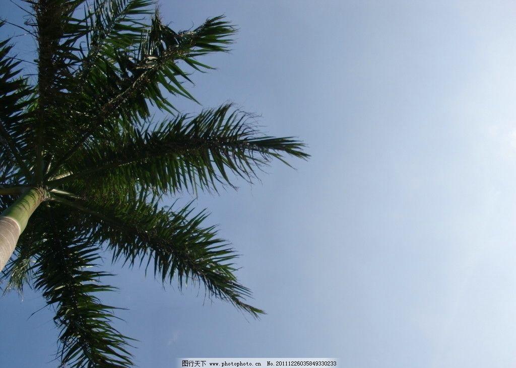 假日海滩椰子树 海南海口假日海滩 椰子树 美景 自然风景 旅游 摄影